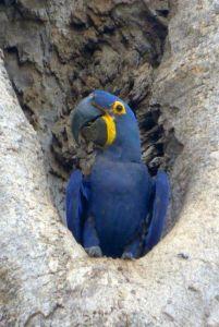 Macaw E